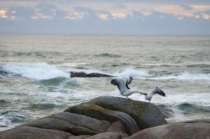 Photo: Seagulls